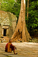 Monk with Tree, Ta Prohm