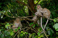 Monkeys in Shianoukville