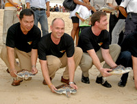 Releasing the turtles