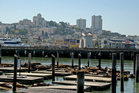 San Francisco Skyline from Pier 39
